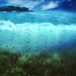 world_of_sea
